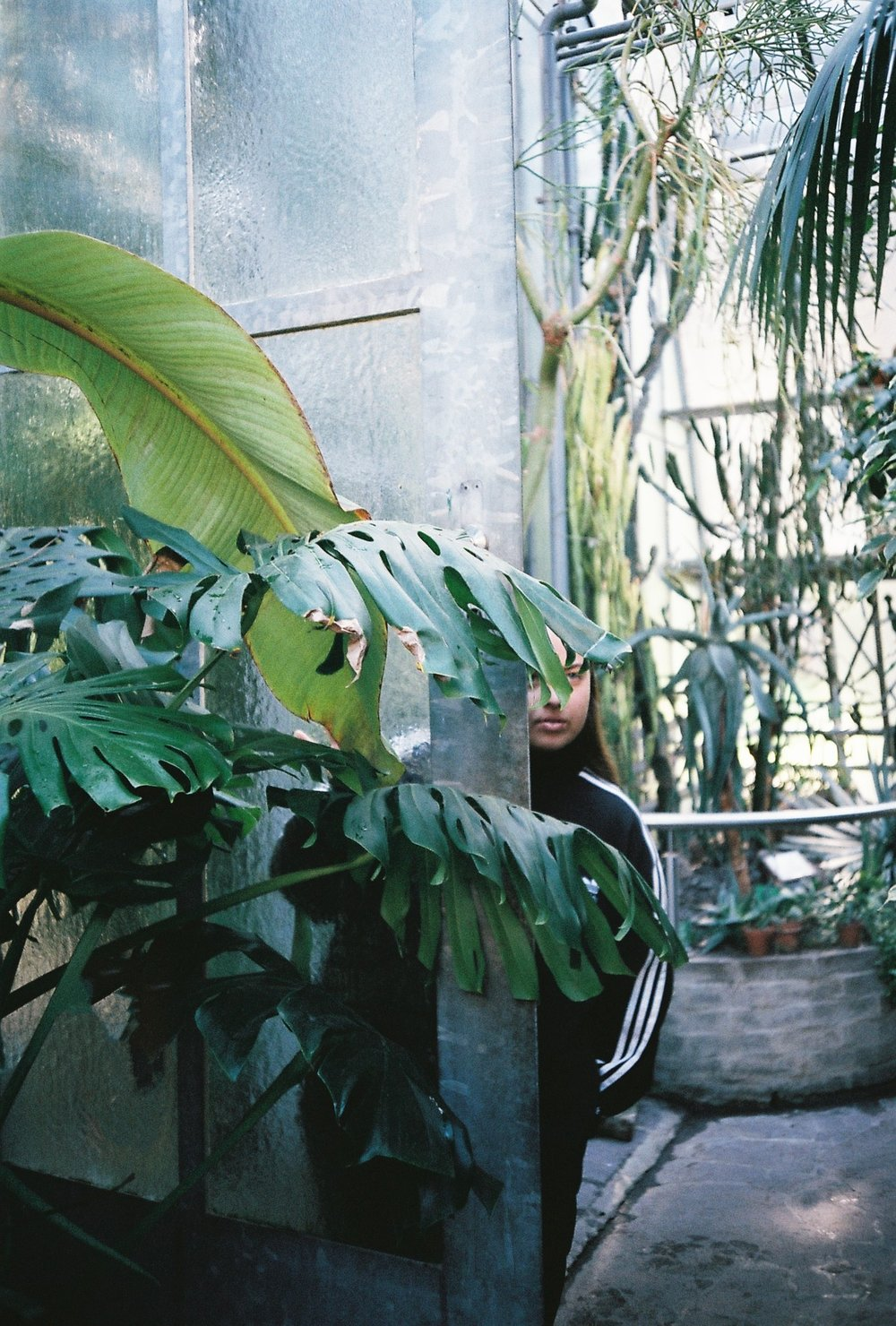 Holly Riding - Greenhouse_2.jpg