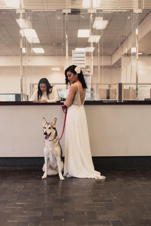 HuskyWeddingPhotographer_WolfdogPhotographer