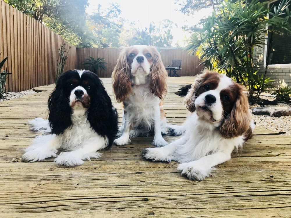 Join My Pack! - I would be honored to help you create that Calm, Balanced state of mind for your dog and your entire family!
