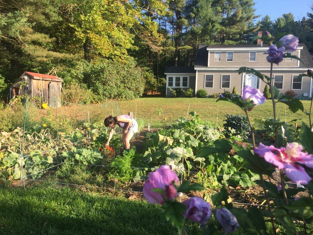 Picking marigolds in the garden