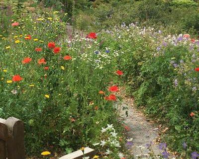 Wildflowers-in-the-cottage-garden-400x320.jpg