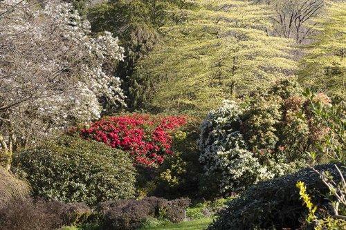 TGH Magnolia Rhododendron Cornus