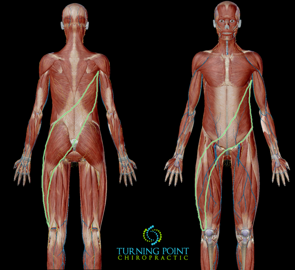 The green outlines posterior and anterior oblique slings. The muscle system that is dominant when doing rotational activity. These can be easily overworked on one side when shoveling.