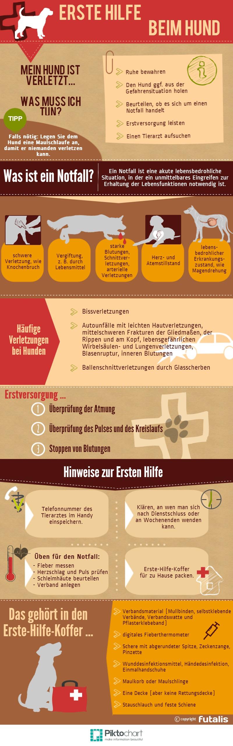 erste-hilfe-beim-hund-infografik.jpg