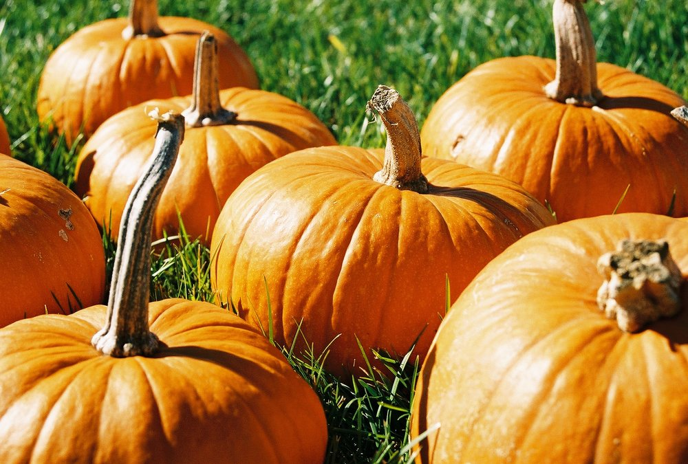 Pumpkins contain more than 20% of your daily fiber!