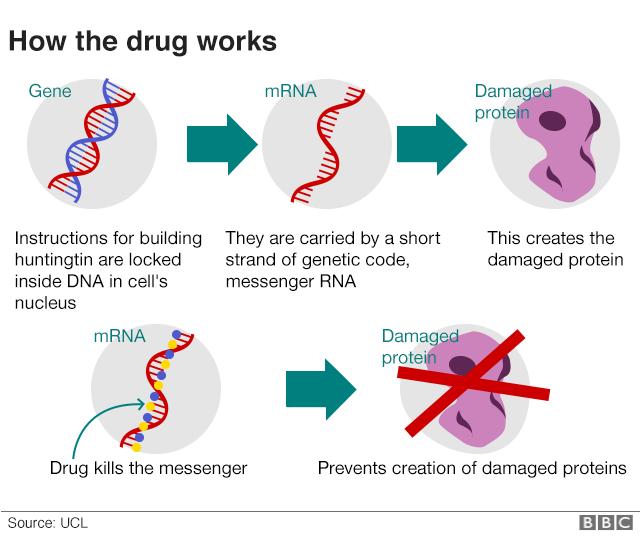 Huntingtons Breakthrough May Stop Disease Foxg1 Research Foundation