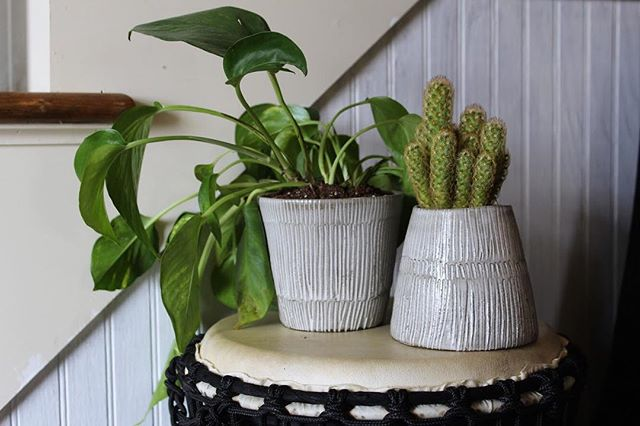 Christmas is right around the corner!! Order by the 17th to get your Christmas gifts ❤️ link in bio. #christmas #nettiechristine_ceramics #planter #ceramicplanter #ceramics #gifts #pottery #pothos #goldenpothos #lemoncactus