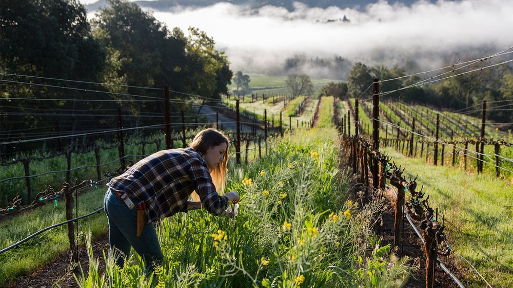 Single Thread, the Restaurant Redefining Wine Country