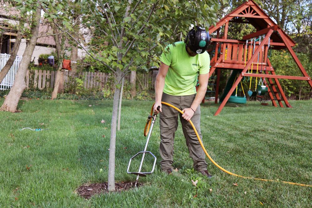 Russell Tree Experts Tree Fertilization