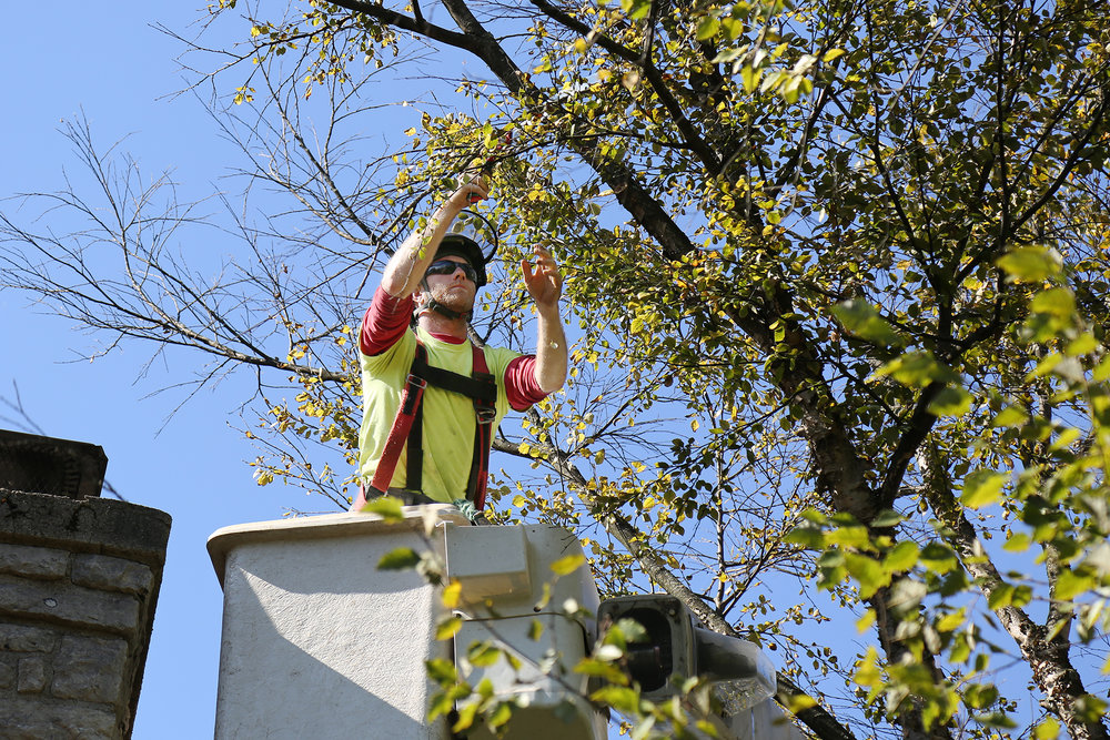 Russell Tree Experts Tree Pruning