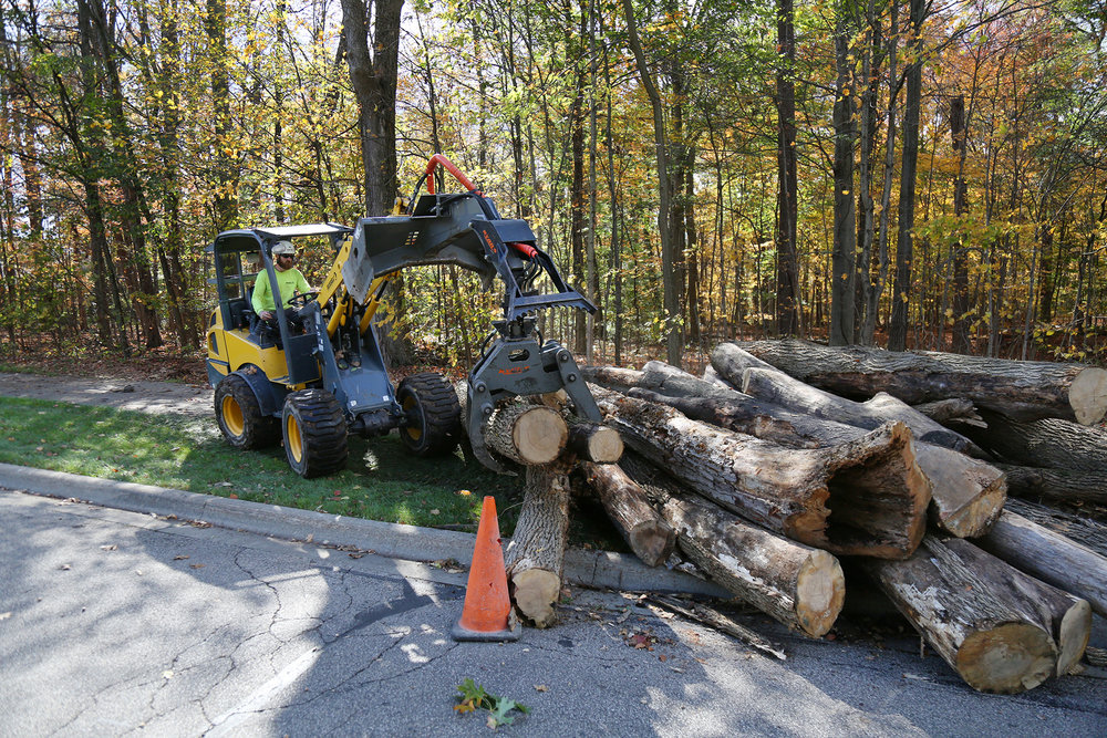 Russell Tree Experts Municipal Tree Services