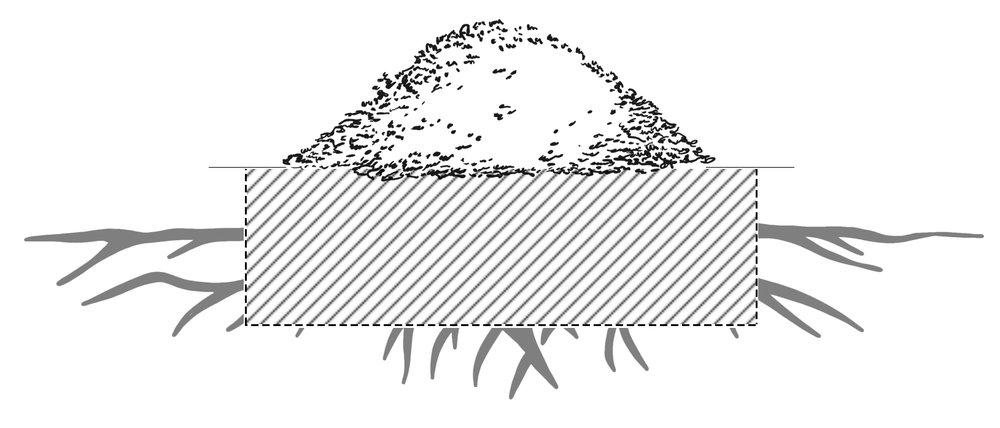 Deep & Wide Stump Grinding