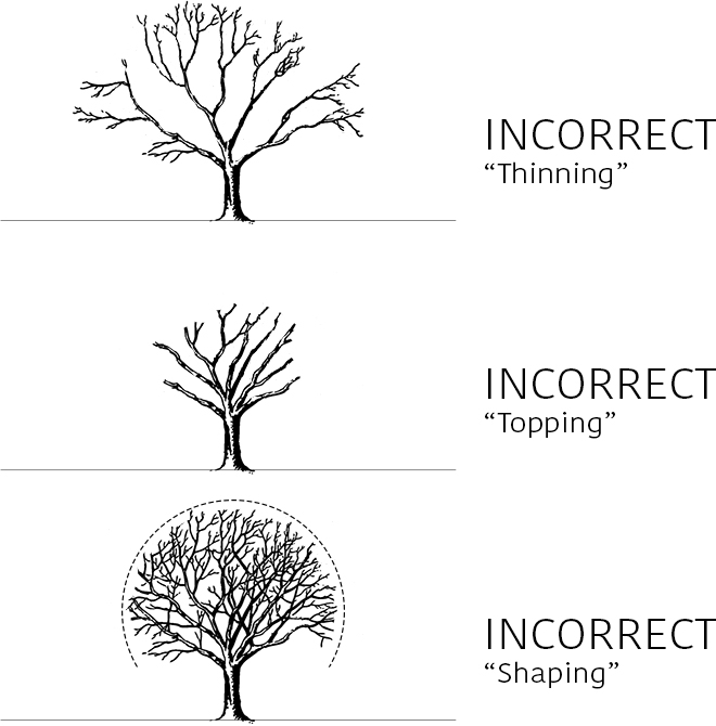Improper Pruning Techniques