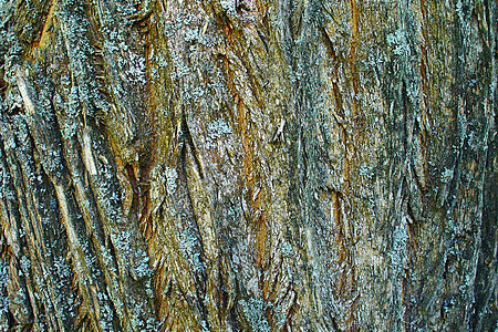 Osage Orange Bark