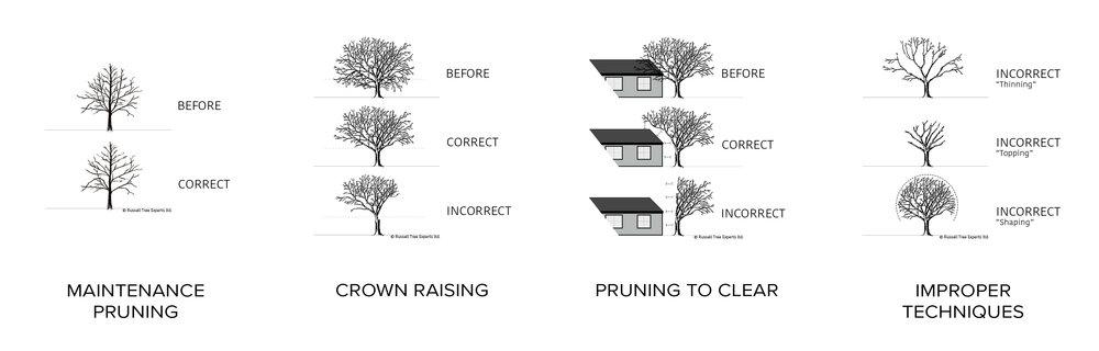 pruning-proper.jpg