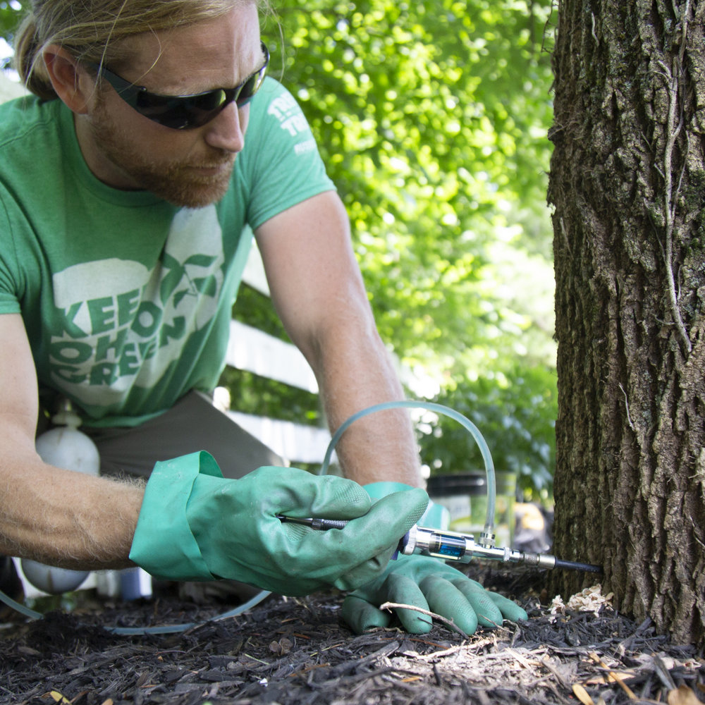 Tree Wellness - Many trees are linchpins for parks and golf courses. From fertilization to pest and disease management, our tree wellness team excels in providing the best plant health care to help keep trees healthy.