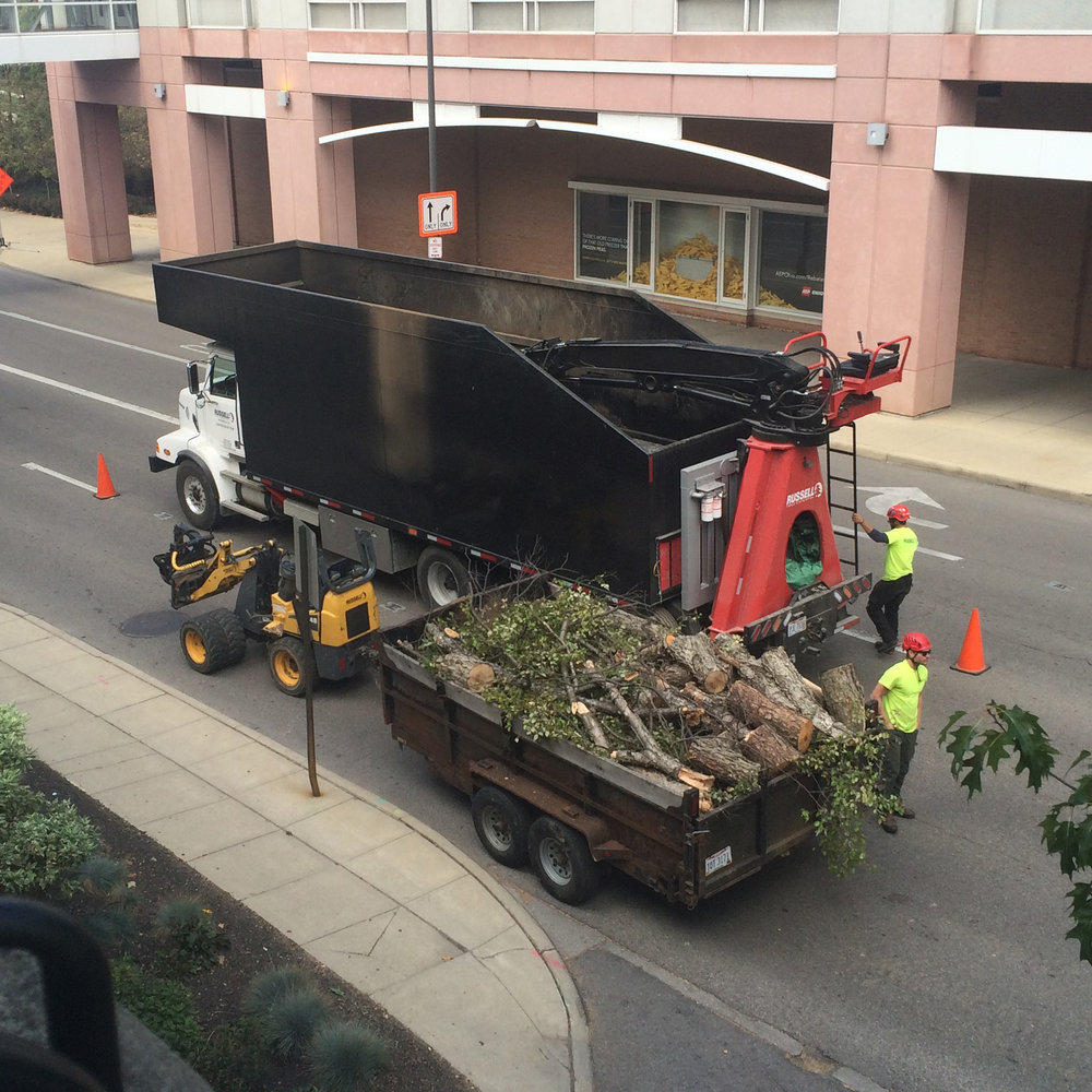 Tree Services  - It's important that your business is beautiful inside and out - We're here to provide all the tree services needed to make your company's trees be healthy and beautiful. Click Here to See Services