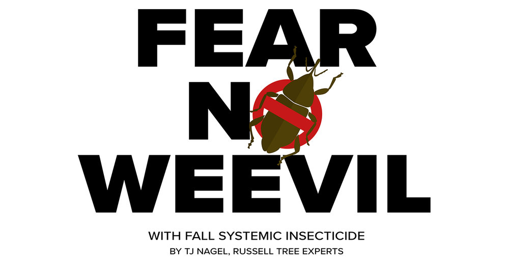 fear-no-weevil-v2.jpg