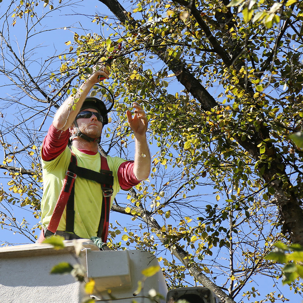 TREE SERVICES -