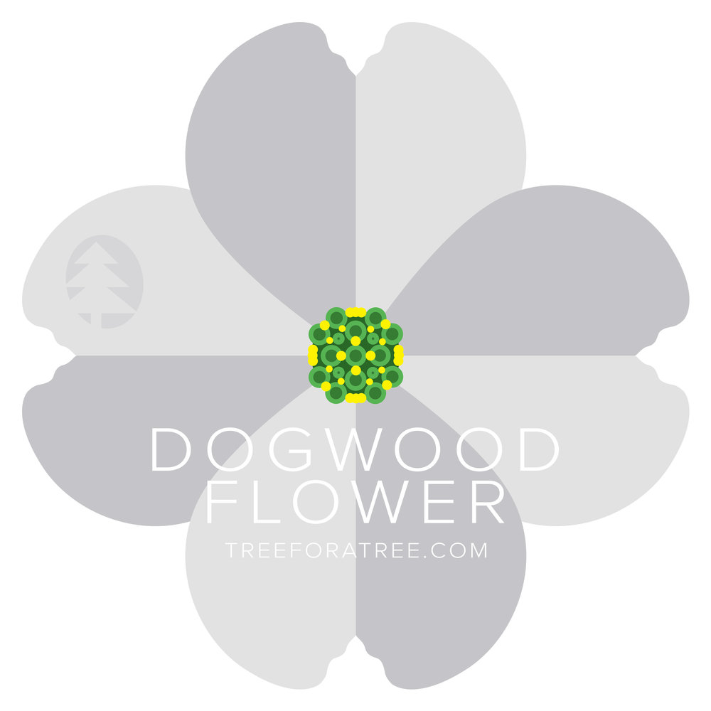Dogwood - Latin Name: Cornus floridaGrowth Rate: SlowMature Height: ≈15 ftMature Spread: ≈20 ftState Champ: Licking Co. (33' high x 42' spread)