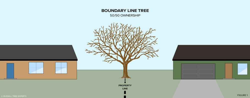 Boundary Line Tree: Neither of the property owners is at liberty to cut the [boundary line] tree without the consent of the other.