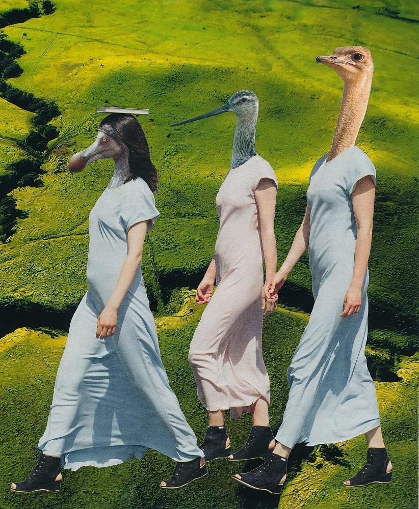 birdwalk - FASHION