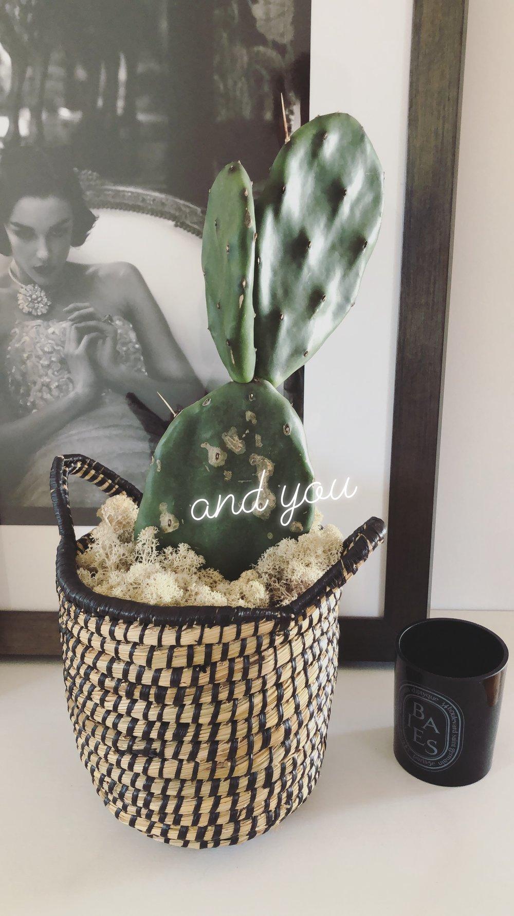 Cactus, $14.50 / Basket $25