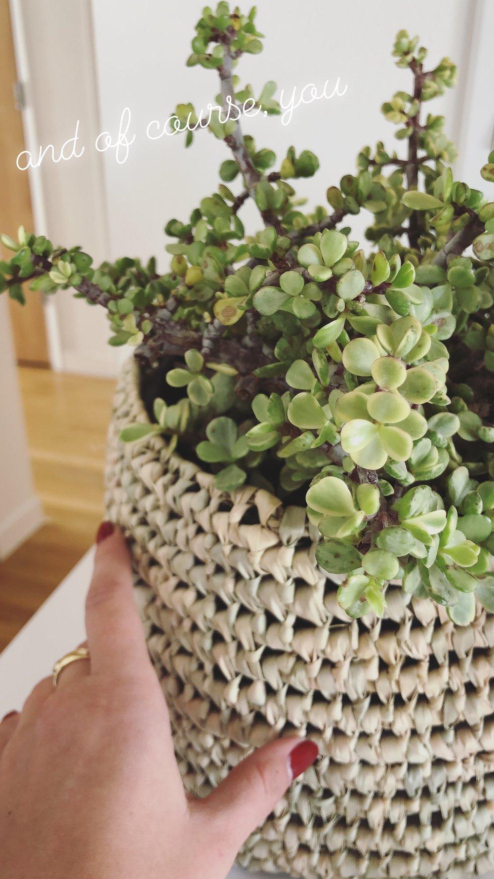 Succulent, $14.50 / Basket, $8.50