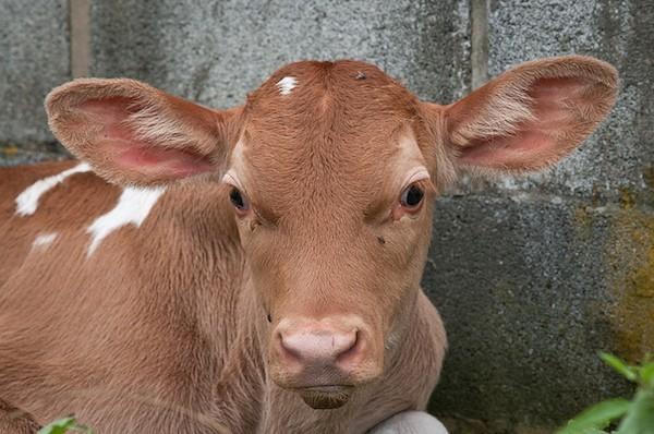 """The Raw Milk Debate"""