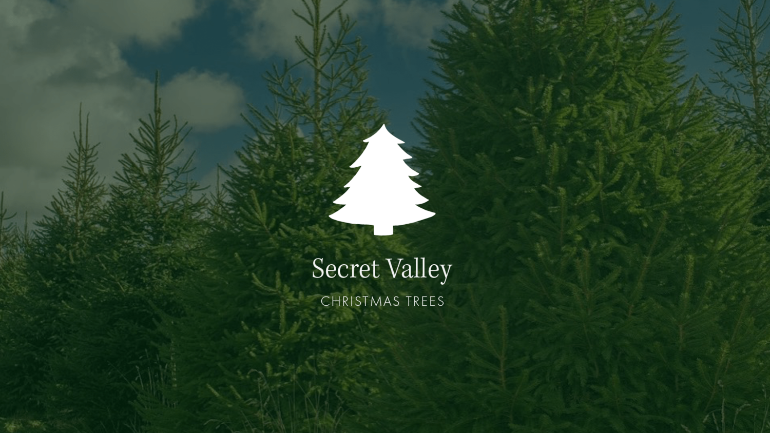 Somerset Christmas Trees From £12 - While Stocks Last! — Christmas Trees In  Somerset