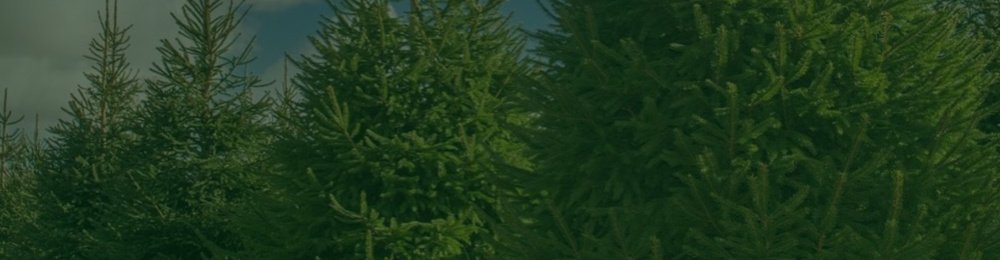 Christmas Trees Header-06.png