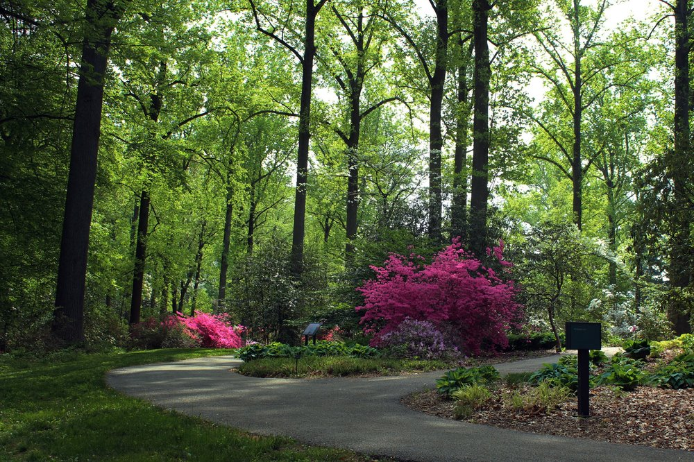 TYLER PAINT-OUTS - Tyler Arboretum, April - OctoberLandArt Events has partnered with Tyler Arboretum to bring you Tyler Arboretum Invitational paint outs. Seven date specific events.