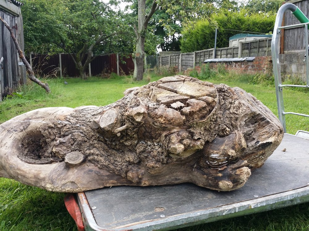 The Driftwood Slab after its 2 years of drying now ready to be carved.