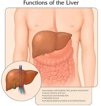 hepatitis_liver.jpg