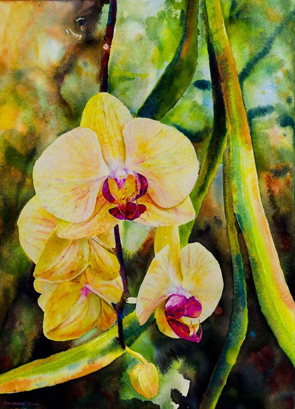 Ross Barbera, Phalaenopsis Orchids, watercolor on paper, 30 x 22, 2017