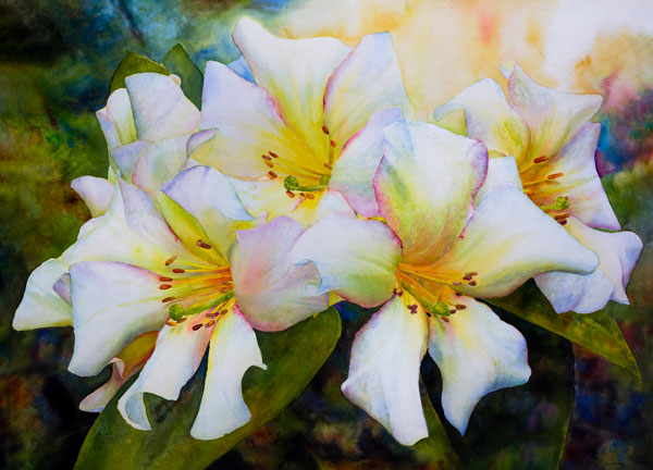 Ross-Barbera,-White-Rhododendrons,-Mounted-Watercolor-on-Canvas,-32-x-42,-2014