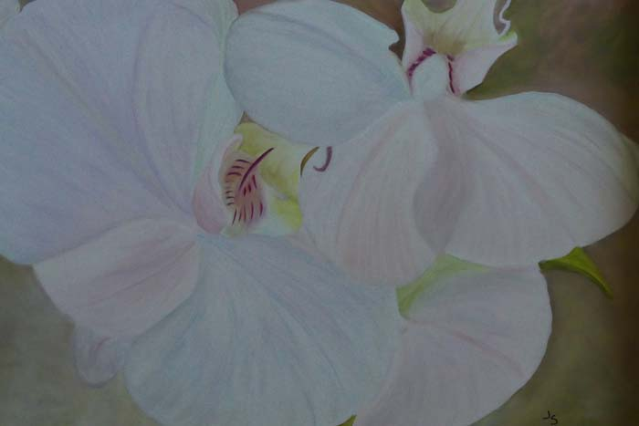 Orchid Elegance - Oil - 24x20 - $495