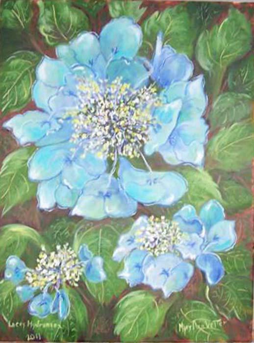Lacey Hydrangea