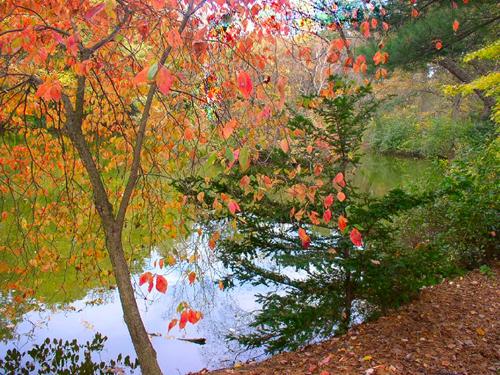 Westbury Fall.jpg