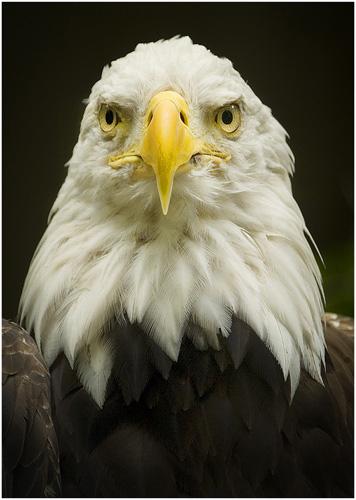 Proud Eagle.jpg