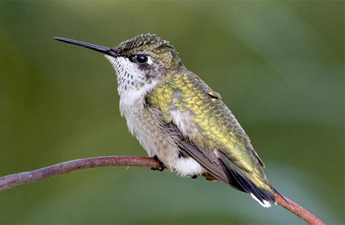 mortimore_hummingbird_registry.jpg