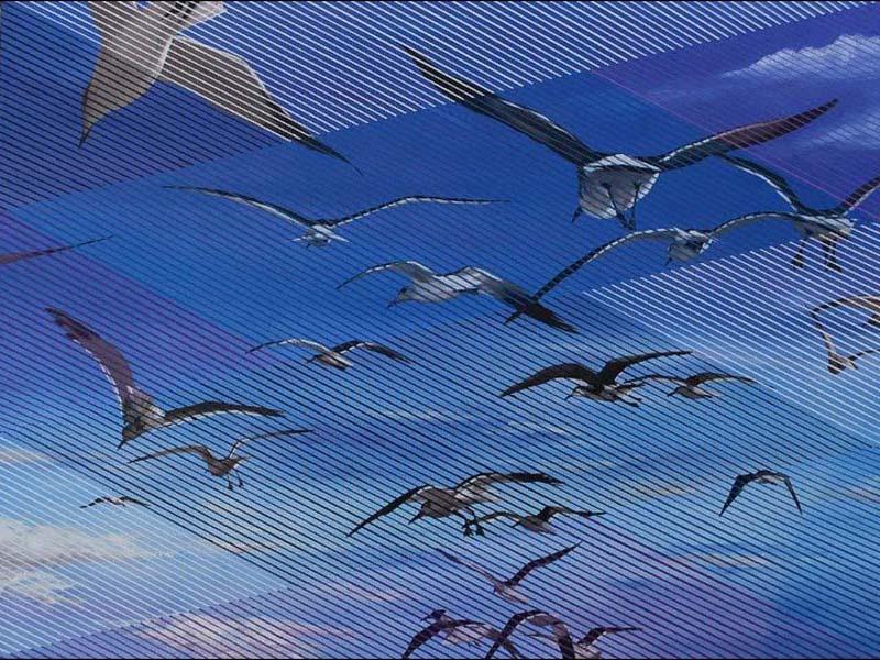 """Birds in flight – Oil on Canvas 40"""" x 30"""" by Don Weber.jpg"""