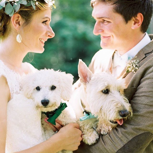 My husband and I have 3 dogs - Charles, Winston, Oliver. It was unintentional that they all 3 are white fur balls under 25 pounds, but we wouldn't change it for the world! . . This photo was taken by Perry Vaile at our wedding nearly 3 years ago, and I wanted I share it again today because here Charles (on the right), was almost 1 and a half and Winston (left), was only 6 months old. Last Saturday Winston turned 3, and today Charles turns 4! I can't believe it's only been a couple of years. It feels like all 3 pups (Oliver wasn't born yet 😂), have always been a part of our lives. . . Does anyone else out there have fur babies that they can't spend a day without?! 🙋🏼