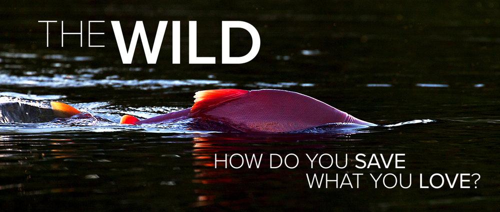 The Wild Film