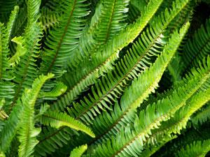 Weed295A.jpg