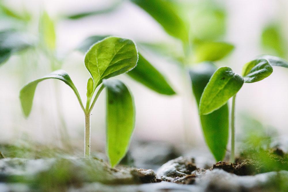 發現價值 - 無毒土壤還原農法是為了回到土地根本的價值。目前市場上找不到的健康食材,健康土讓,讓我們一起推廣給大家。