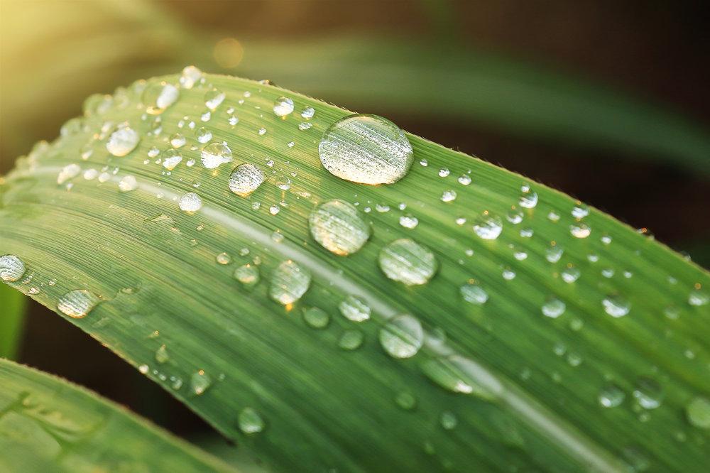 人體中大部分是水 - 人體約有70%都是水。體內的水,有些以細胞內液的形態存在,有些則儲存在細胞內。骨骼約50%,肌肉約80%,皮膚約70%,心臟等臟器約80%,而血液至少90%以上是水分。因為現代人幾乎都可說是「半健康」或「半生病」的,雖然還未到需要住院的程度,但是也稱不上是完全健康的人。這樣的現代人,要想獲得真正健康和完美的身體,就唯有淨化體內的毒素,壯大強盛的生命力;因此,絕對要攝取這種活的水且是弱鹼性水。