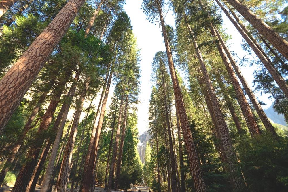 樹能吸碳,也能帶來生活的正能量