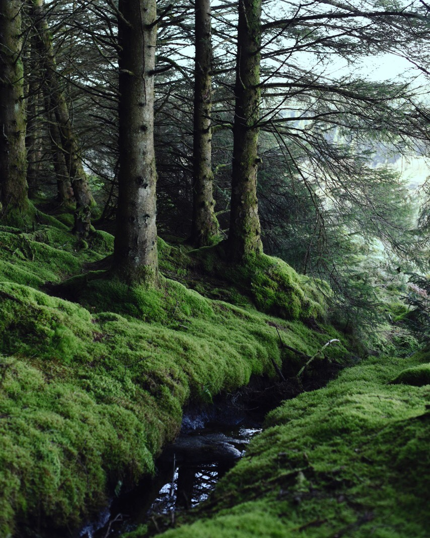 Glenariff Forest Park; one of the greenest places I know, pine trees and moss, rolling hills and that rolling green sea beyond.