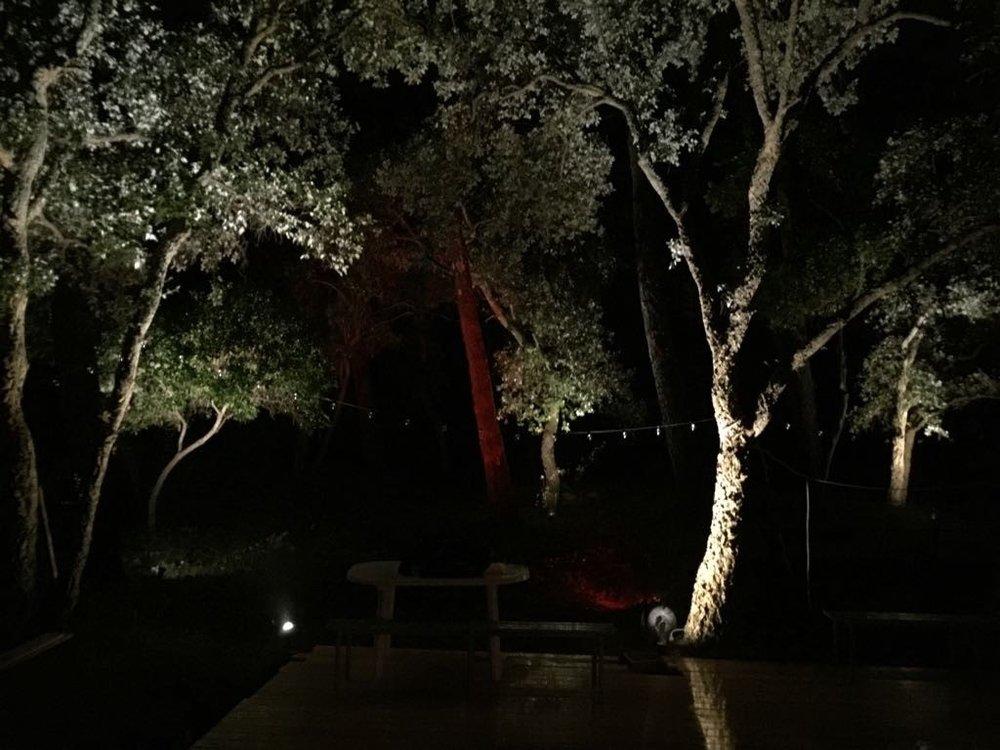 tree alumination garden.jpg